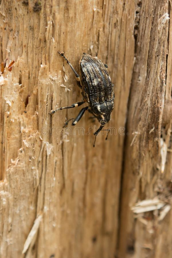 一只甲虫的特写镜头在一棵树的在新西兰` s开普勒轨道的,其中一一个森林里南岛` s巨大步行 库存照片