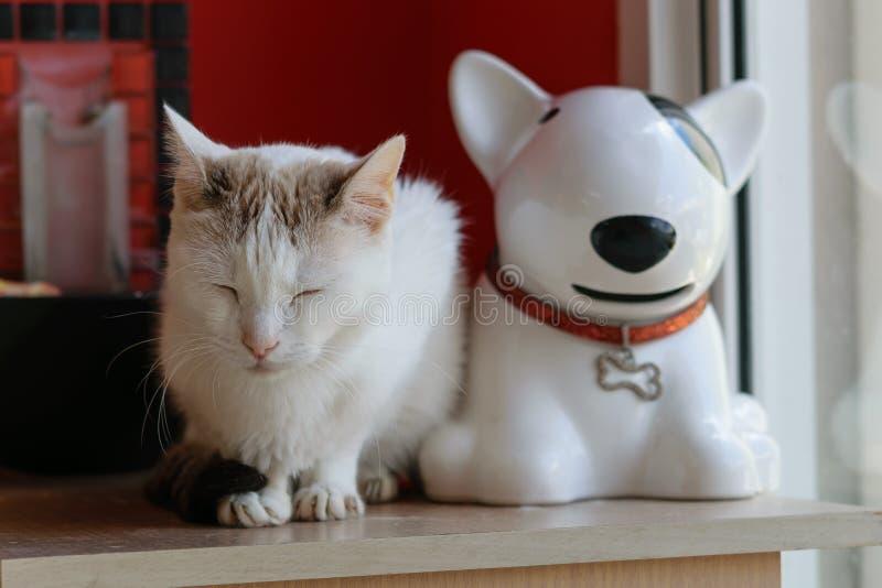 一只白色猫和一条白色陶瓷狗在窗口附近坐 免版税库存图片