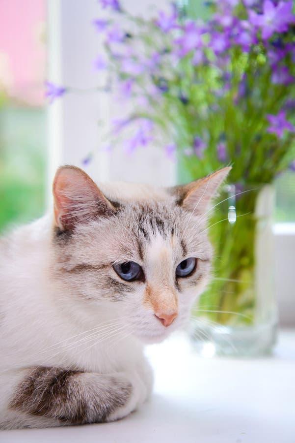 一只白色猫的画象在窗台的 免版税库存图片