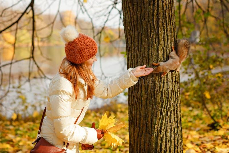 一只盖帽哺养的灰鼠的红发女孩在秋天森林里 免版税库存照片