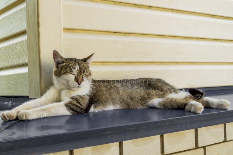 一只美丽的三色幼小母猫的画象在金属机盖在家说谎并且放松与闭上的眼睛 库存照片