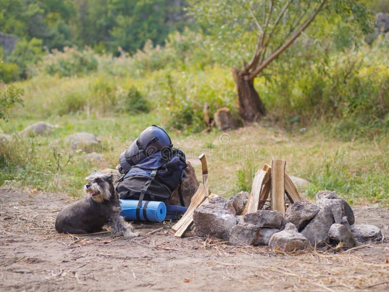 一只美丽的小髯狗在准备的火附近说谎 到自然的夏天旅行与狗 夏天旅行 库存照片