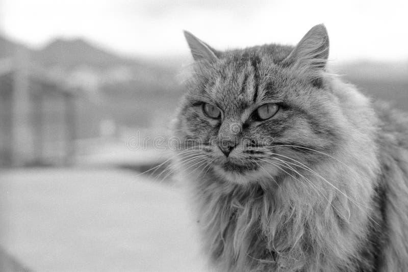 一只美丽的猫在Guihua寺庙Songzan居住 免版税图库摄影