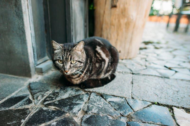一只美丽的猫的画象在街道上的 库存照片