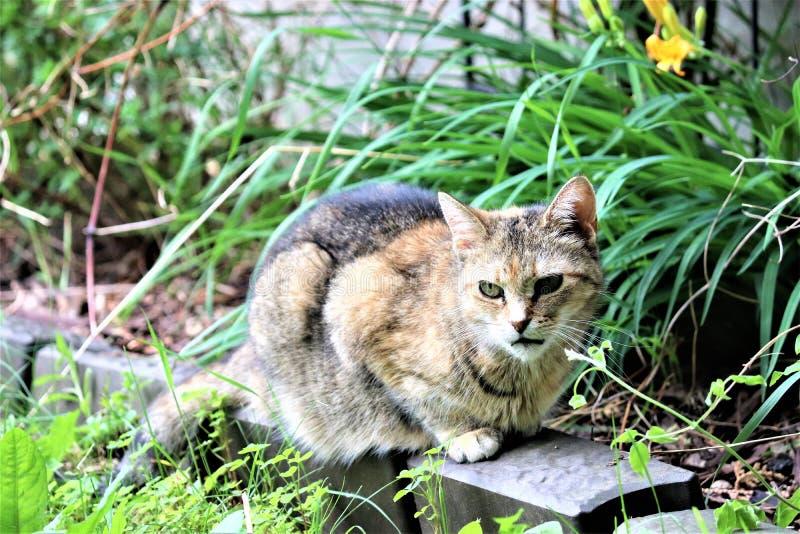 一只美丽的虎斑猫一chillin `在一美好的天 免版税图库摄影