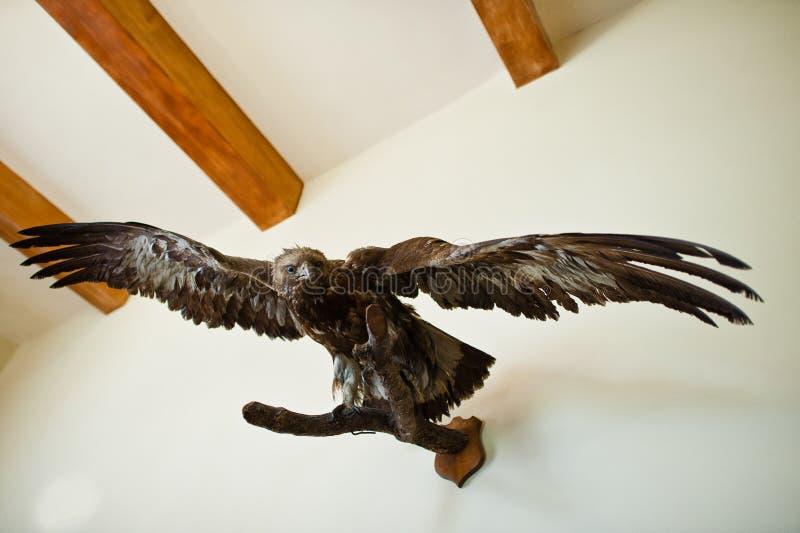 一只老鹰的特写镜头照片在墙壁上的 免版税库存图片