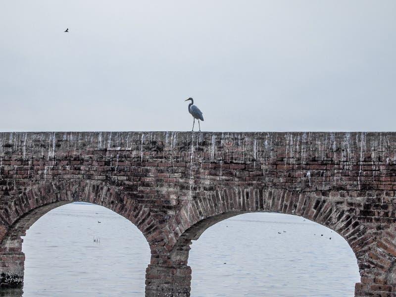 一只苍鹭的图象在一个砖墙上的有曲拱的在河 免版税库存照片