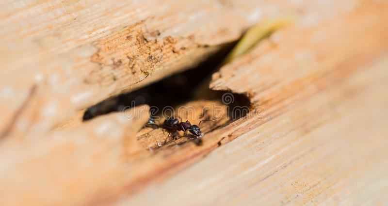 一只蚂蚁用在树干的一些糖 免版税库存照片