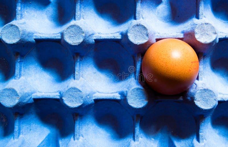 一只蛋放在蓝纸板蛋架里 具有复制空间的顶视图或平面层 免版税库存图片