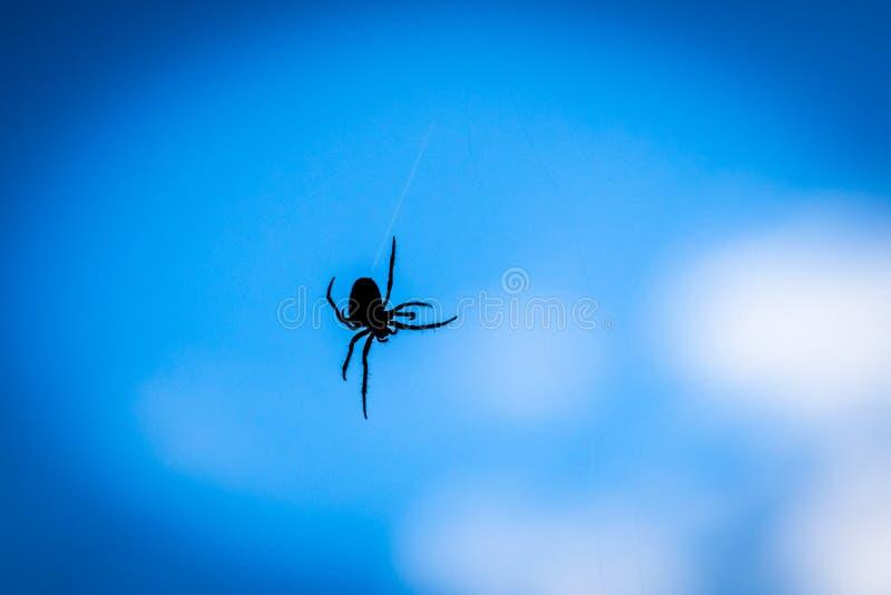 一只蜘蛛的剪影的关闭有蓝色背景 免版税库存照片