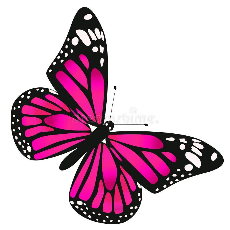 一只蝴蝶是在颜色的黑暗的桃红色 在白色背景隔绝的向量图形 向量例证