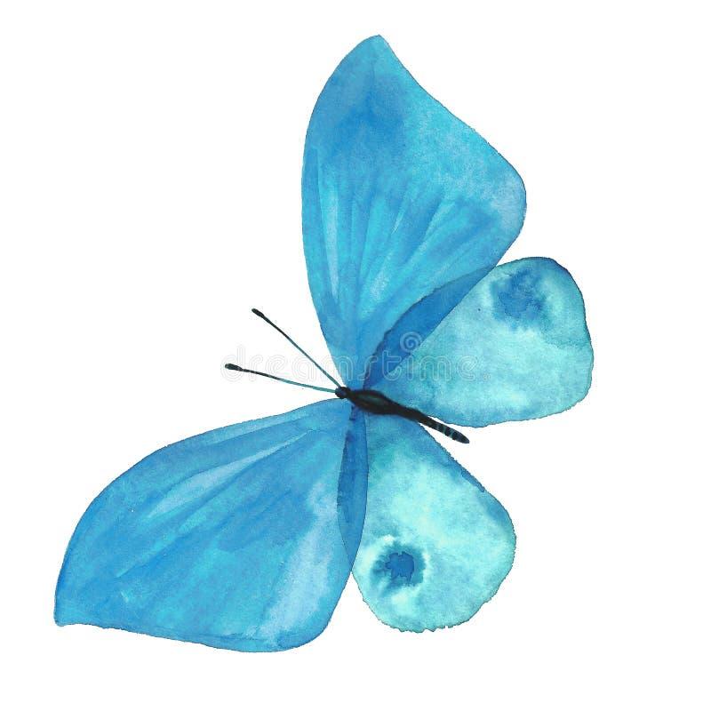 一只蝴蝶的水彩图象在白色背景的 免版税库存图片