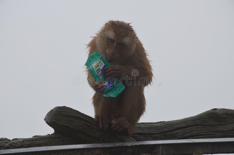 一只被浸泡的小的棕色猴子坐栏杆并且拿着一盒湿抹反对灰色多雨天空 图库摄影