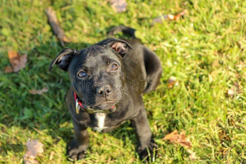 一只逗人喜爱的小狗的画象图片 免版税库存图片