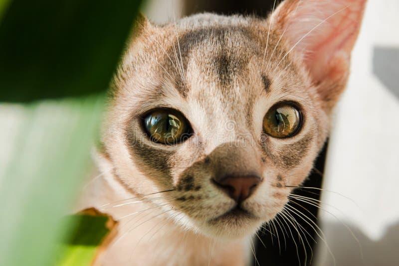 一只逗人喜爱的小的小猫的面孔的特写镜头 库存照片