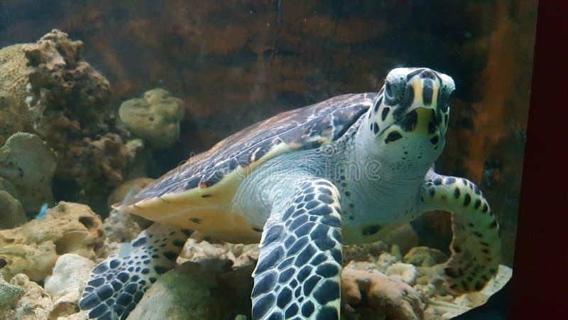 一只逗人喜爱的小的海龟 免版税库存图片
