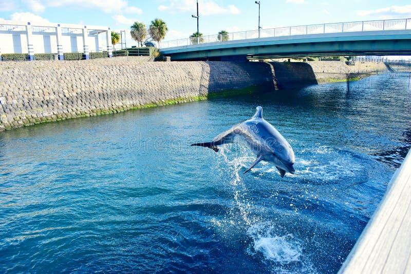 一只逗人喜爱的海豚跳出水 免版税库存照片
