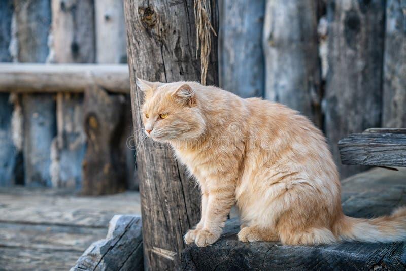 一只逗人喜爱的蓬松猫的画象在街道上的 库存照片