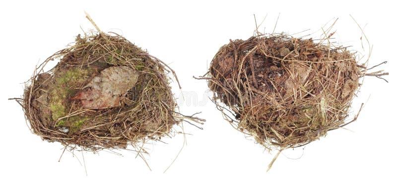 一只野生森林鸟的真正的巢由干草和mos制成 库存照片