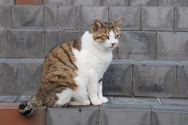 一只非常美丽的逗人喜爱猫非常美丽的猫美妙的动物宠物的哺乳动物乐趣 库存照片