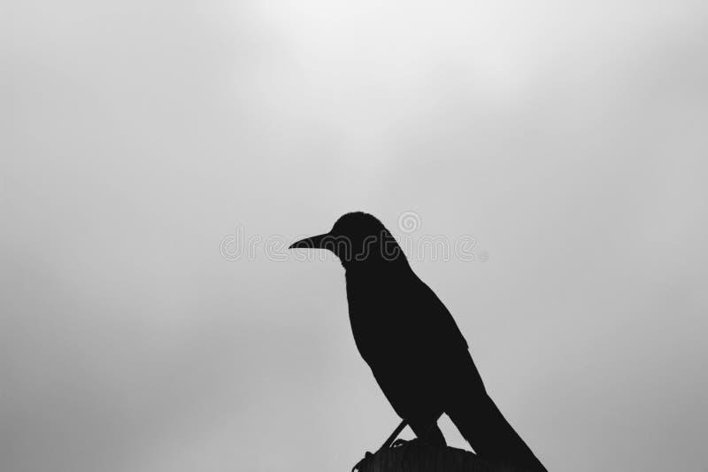一只鸟的剪影有被弄脏的自然天空背景 库存图片