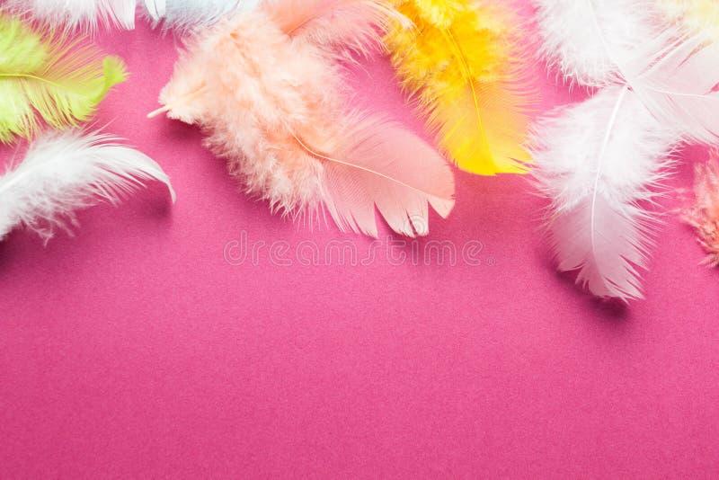 一只鸟的许多五颜六色的美丽和软的羽毛背景在桃红色的 r 库存图片