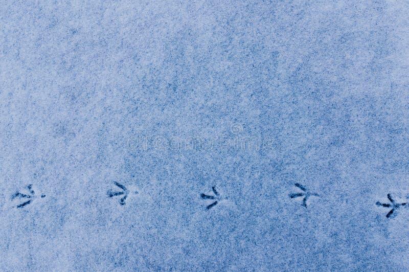 一只鸟的踪影在新鲜的雪的 免版税库存照片