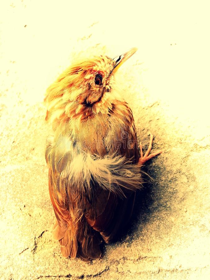 一只鸟 图库摄影