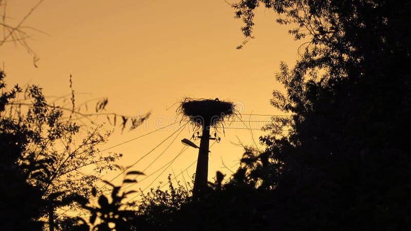 一只鹳的巢在日落的 免版税库存图片
