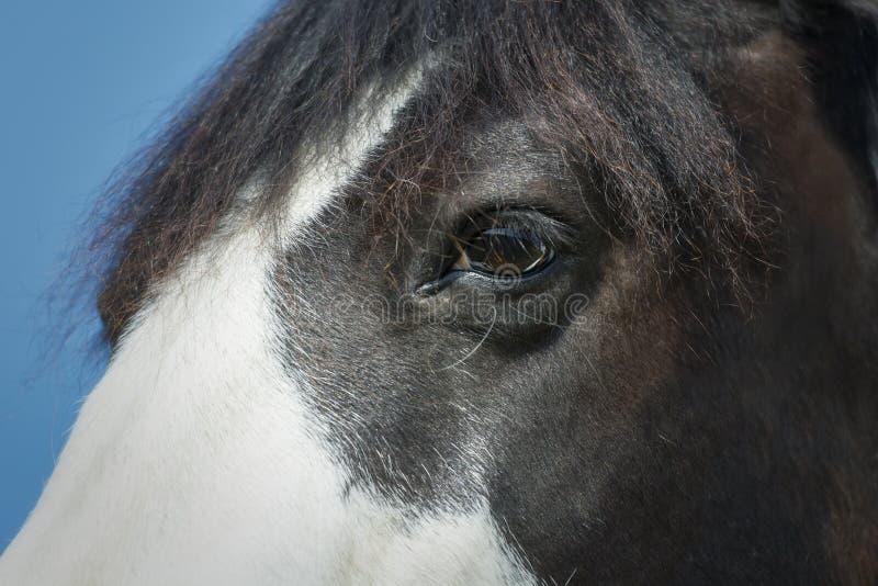 一只黑白油漆马眼睛的特写镜头 库存图片