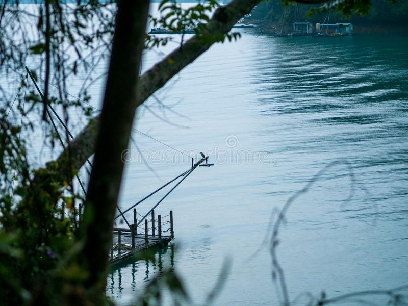 一只黑被加冠的夜苍鹭(;Nycticorax nycticorax);栖息在钓鱼木筏在湖 图库摄影
