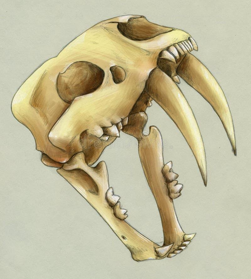 一只绝种齿状军刀的老虎的手拉的短桨 向量例证