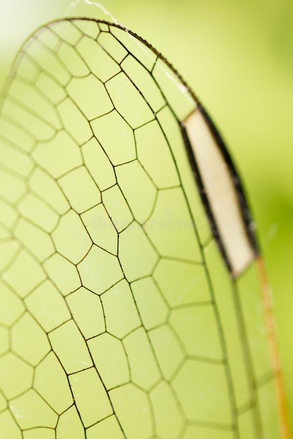 一只蜻蜓的翼作为背景 图库摄影