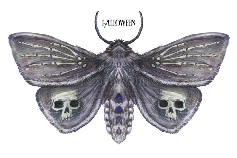 一只蝴蝶夜蝴蝶、一只可怕的蝴蝶与一块头骨的一个万圣夜假日在它的翼和骨头的水彩图画 库存例证