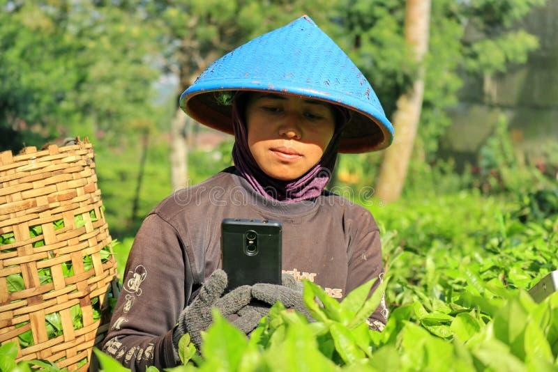 一名女工在茶园 免版税库存图片