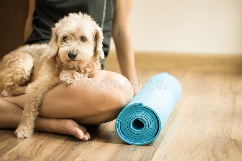 一名妇女和一条狗在瑜伽分类 库存图片