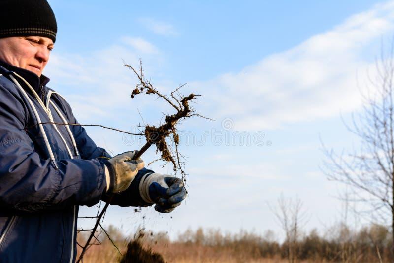 一名妇女在她的反对天空的手上拿着一棵年轻树发现与根 免版税库存图片