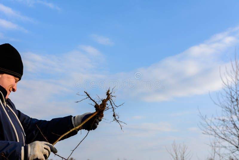 一名妇女在她的反对天空的手上拿着一棵年轻树发现与根 免版税库存照片
