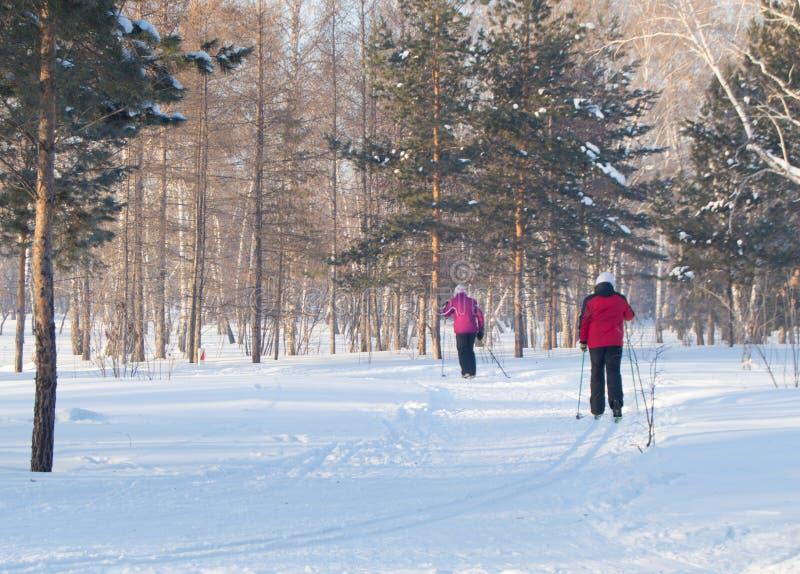 一名年长妇女在多雪的冬天森林或公园,在退休的活跃生活方式滑雪 库存图片