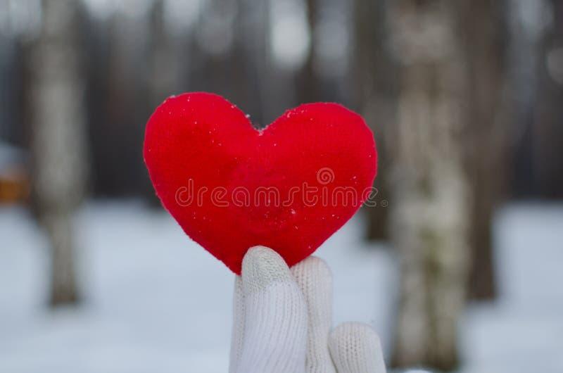 一名男人或妇女的手一副白色手套的拿着一红心在冬天森林里反对白雪 免版税库存图片