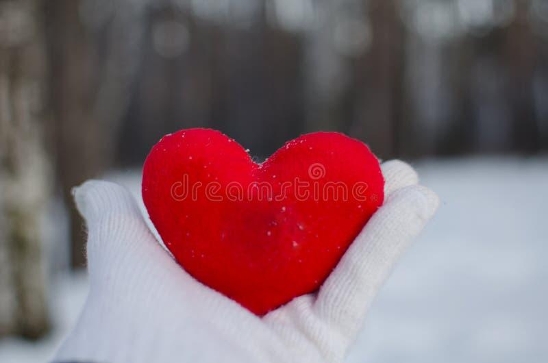 一名男人或妇女的手一副白色手套的拿着一红心在冬天森林里反对白雪 免版税图库摄影