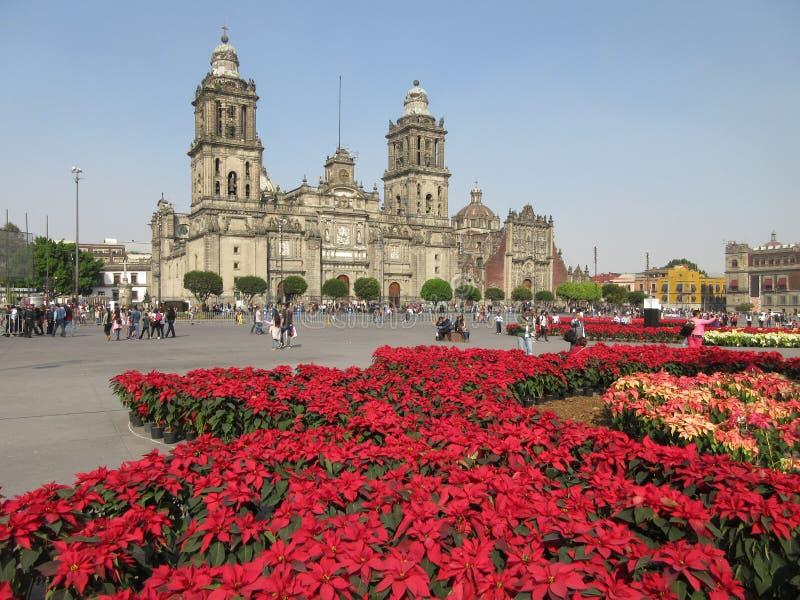 一品红和墨西哥城大教堂 免版税库存照片