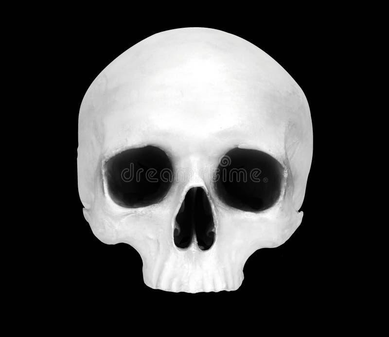 一块假头骨的正面图 库存图片