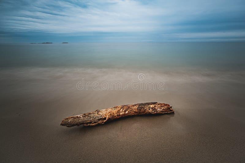 一块木头在海滩的 库存照片