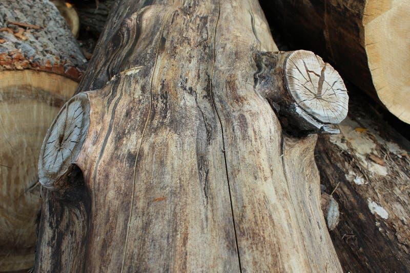 一块木头 免版税库存照片