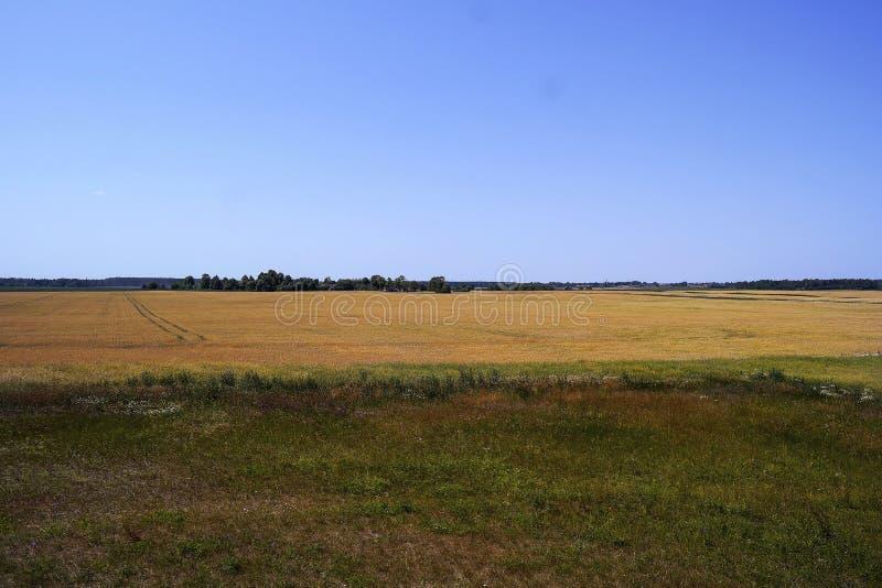 一块金黄麦田的美好的全景 免版税库存图片