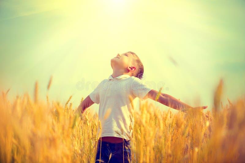 一块麦田的小男孩在阳光下 库存照片