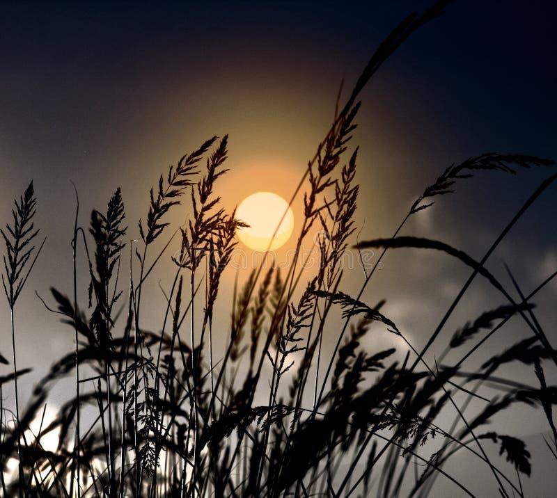一块麦田的美丽的射击与惊人的太阳的在背景和黎明中 免版税库存照片