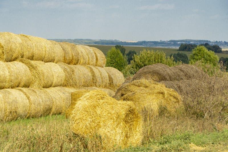 一块麦田 免版税库存图片