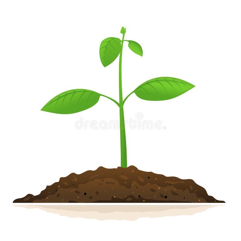 一增长的绿色植物 向量例证